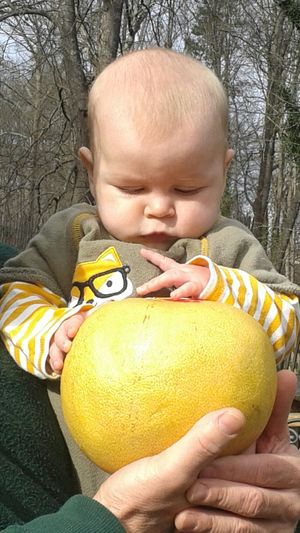 Baby and pomelo Pomelo Pomelo Tree Baby Boy Huge Grapefruit Baby Exploring Fruit