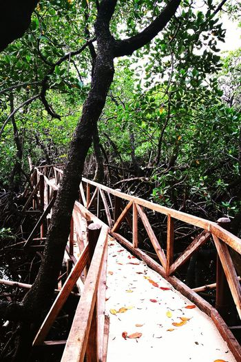 Nature Lagoon Nature Outdoors No People The Week On EyeEm Landscape Aporeef Reef Philippines Mangrove Forest Perspectives On Nature
