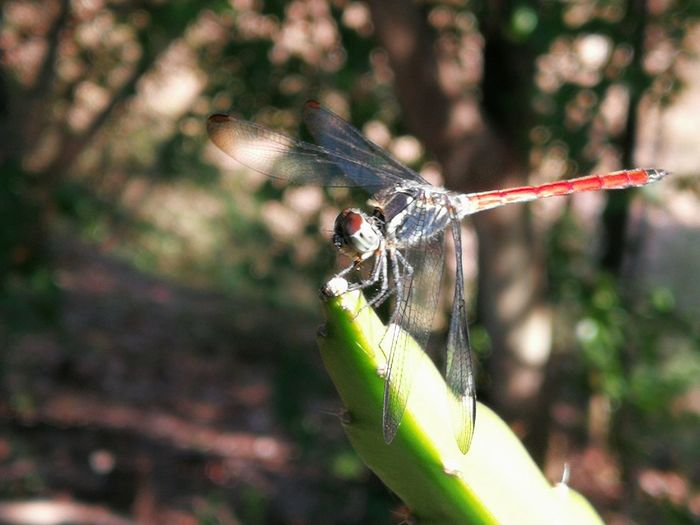 Insect Perching