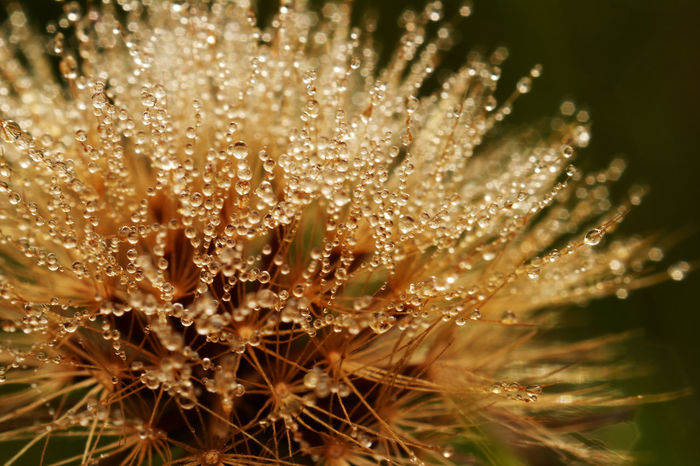 Close-up of flower in morning dew Beauty In Nature Close-up Dalarna Dalecarlia Day Drop Flower Fragility Freshness Gagnef Macro Macro Photography Nature Nature No People Northern Europe Outdoors Plant Plant Scandinavia Sweden Water