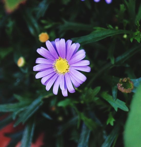 Lowered the exposure Dark Flowers Purple