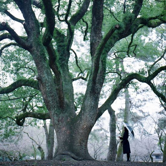 Tree Plant Trunk Tree Trunk Real People Branch Nature Growth Day Leisure Activity Men Outdoors Women Two People Beauty In Nature People Lifestyles Adult Standing
