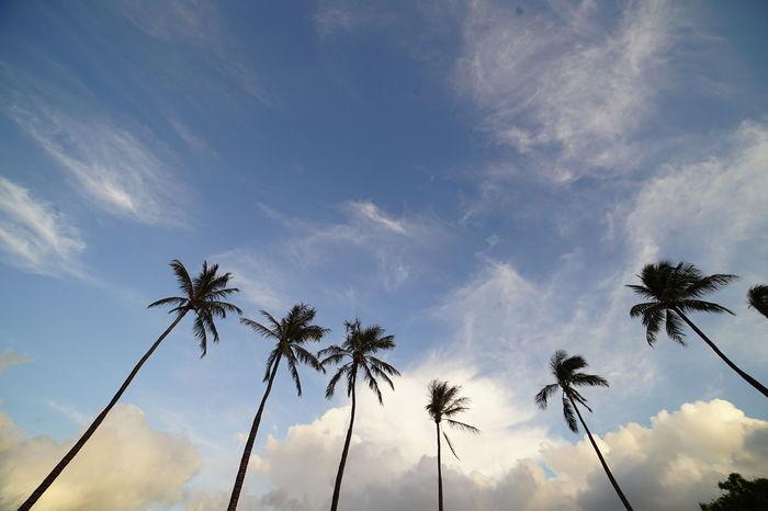 Palm Tree Tree Sky Nature Tropical Climate No People Cloud - Sky Day Outdoors Blue Beauty In Nature Beach Tree Point Of View Oahu / Hawaii Honolulu, Hawaii Vacations Sand Nature Grass