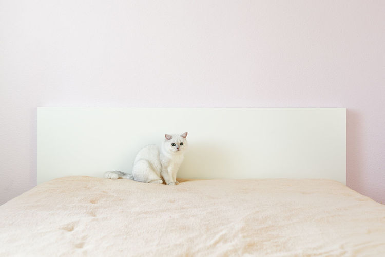 Portrait of a cat sitting on wall
