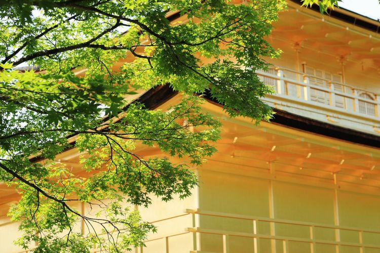 Asian Culture 鹿苑寺(金閣寺)Kinkaku-ji Temple Kyoto, Japan First Eyeem Photo Japan Japan Scenery Kyoto kinkakuji Kinkakuji Temple
