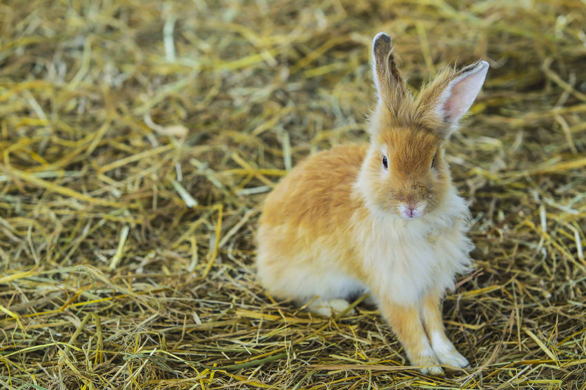 A rabbit hovered over a hay. Nature Small Business Beutiful  Cute Hay Hovered Nice One Person Rabbit Stop