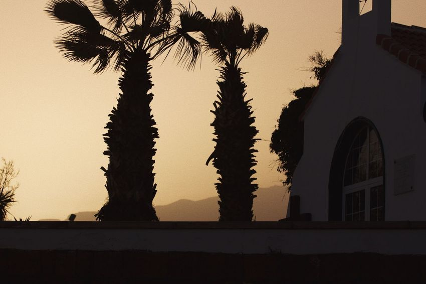 Tenerife Sunset Architecture Palm Tree Tree No People Outdoors Sky Nature Beauty In Nature