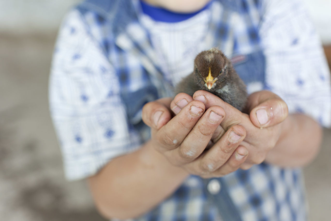 Midsection of child holding young bird