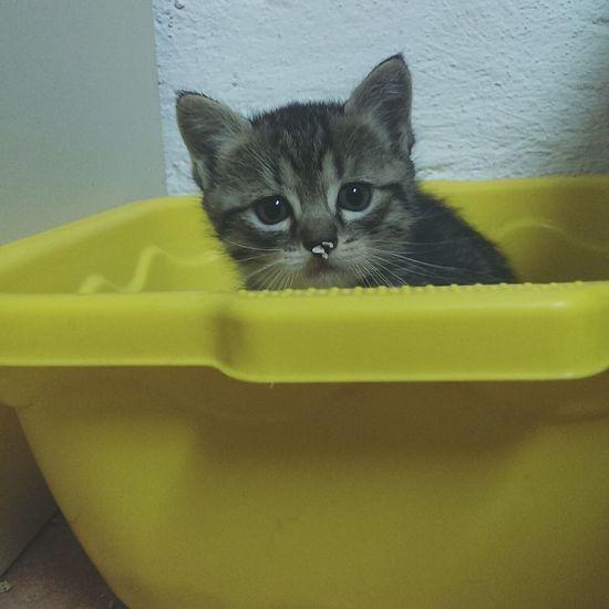 Portrait of cute cat sitting in tub