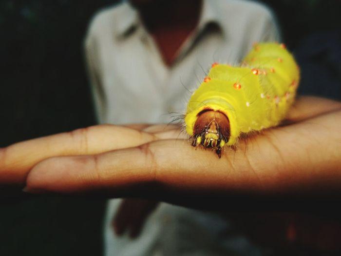 Caterpillar One