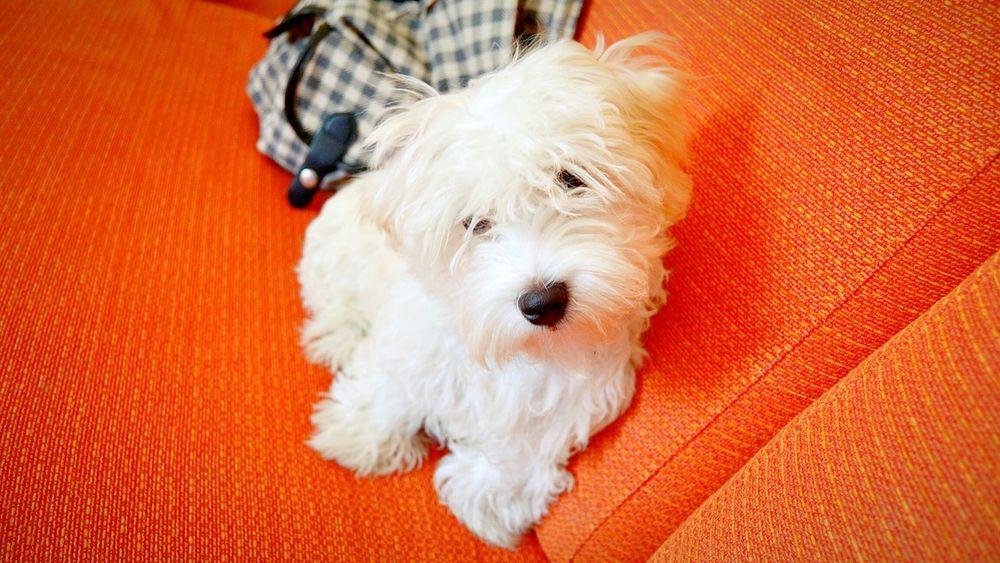 Dog Dog❤ Photo Home Bit