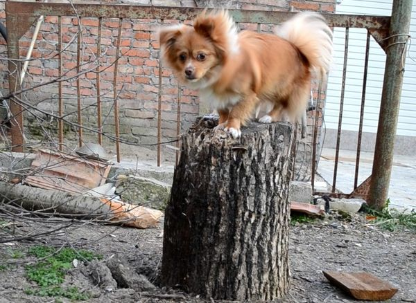 TreT Style :3 хороший спорт для чела и собаки :3 My Dog <3 Small Dogs  Frends I Love My Dog