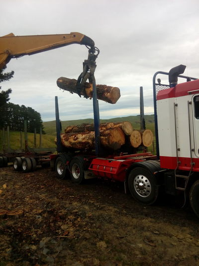 Forestry Logging Forestry Clearance Forestry Industry Logging Equipment Logging Site Logging Truck Outdoors Transportation