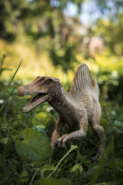 Schleich Dinosaurs Dinosaur Schleich Schleich Tiere Animal Themes Animal Wildlife Animals In The Wild Beauty In Nature Close-up Day Focus On Foreground Green Color Growth Jungle Nature No People One Animal Outdoors Reptile Side View Tree