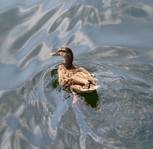 Schnattchen ;-) Animals Beauty In Nature Beauty In Nature Das Leben Ist Schön Duck Ente Lovely Nature Naturelovers Outdoors Rippled Schnatterinchen The Duck Sea Tranquility Water