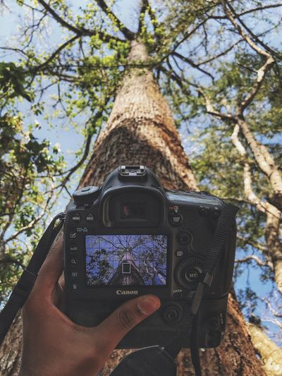 Growth Tree Plant Technology Photography Themes Activity Tree Trunk Trunk Day Nature Photographing No People Camera - Photographic Equipment Camera Forest Digital Camera Close-up Screen Wireless Technology Photographic Equipment Outdoors