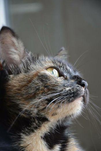 Cat♡ Hello World Mycat♥ its name Pati.. Lovley  EyeEm Nature Lover EyeEm Best Shots