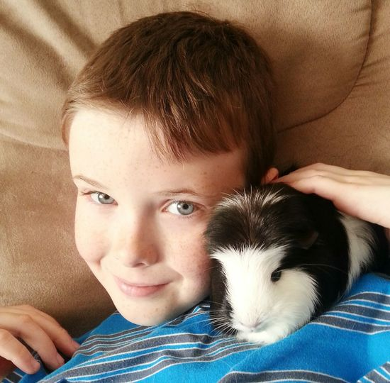 High angle portrait of smiling boy with guinea pig resting on sofa at home
