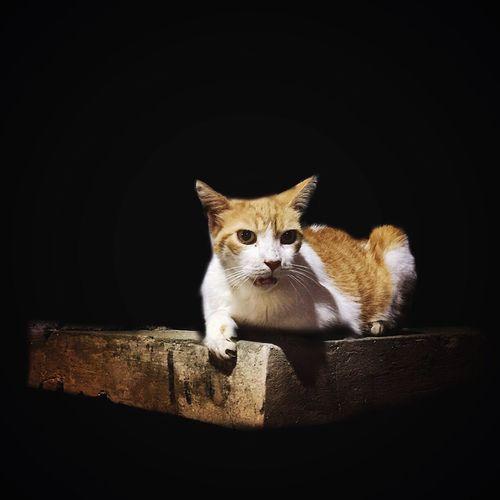 Alert Cat On Wood Against Black Background