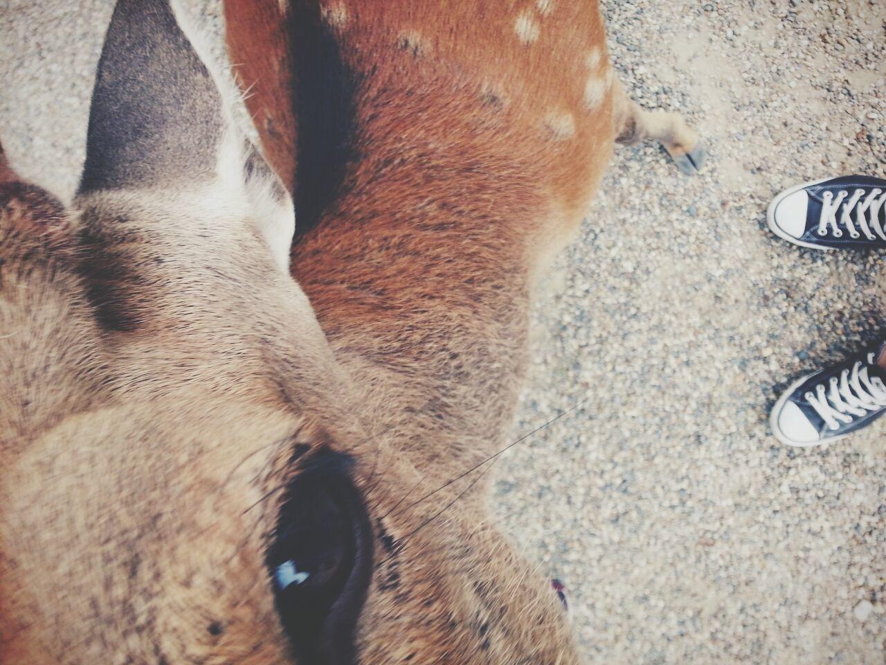 High angle portrait of deer standing on street