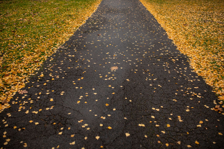 Road Transportation Nature Direction Autumn The Way Forward Change Day High Angle View Sign No People Symbol Street Sunlight Outdoors Plant Part Leaf City Marking Diminishing Perspective