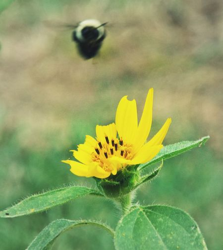 Perfectly Imperfect Sneaking By Caught In Action Nature Insects  Sunflower Plants Wrong Settings Photo Mistakes Original