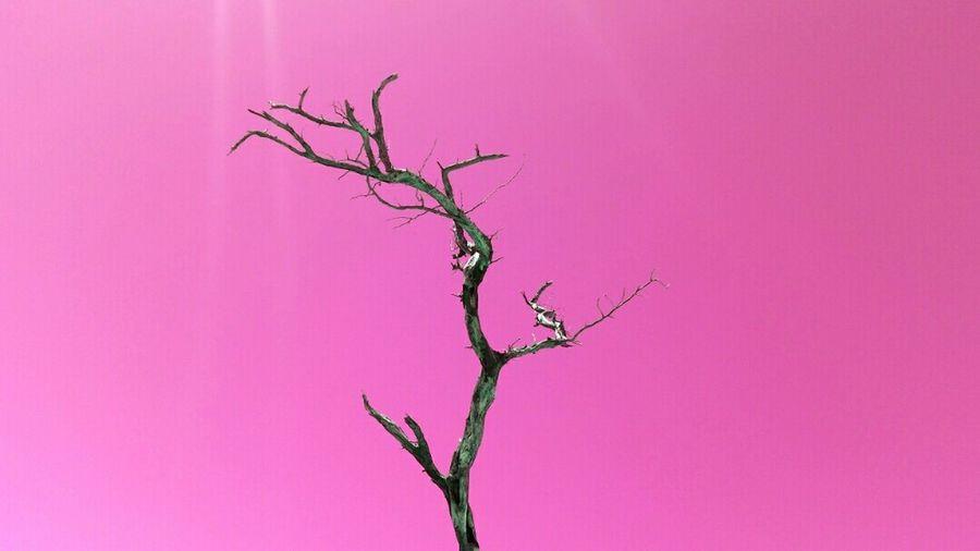 Branch Taking