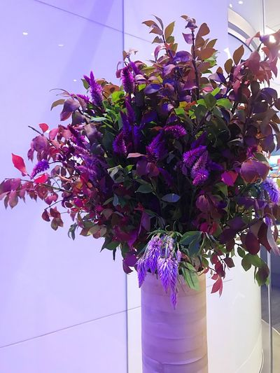Flower Nature Growth Beauty In Nature Purple Fragility Freshness Plant Potted Plant No People Day Pink Color Multi Colored Low Angle View Outdoors Close-up Architecture Flower Head Florist Bouquet Indoors  Bloomberg Building