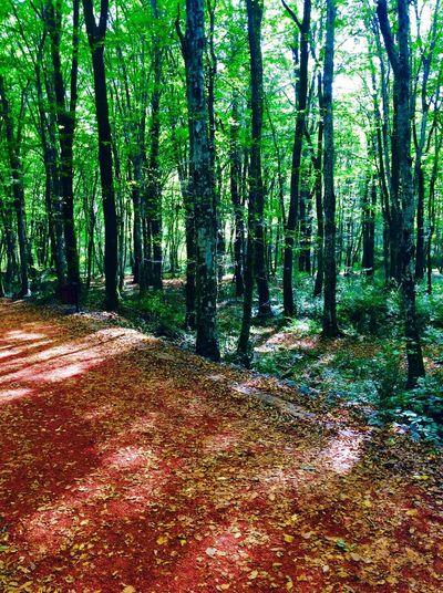 Textures And Surfaces Belgrat ormanı First Eyeem Photo