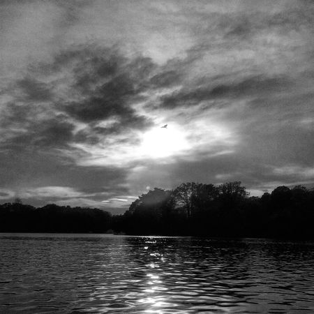 Black & White Bird In Flight On The Water No People Kayaking In Nature My Backyard Oasis California MD USA