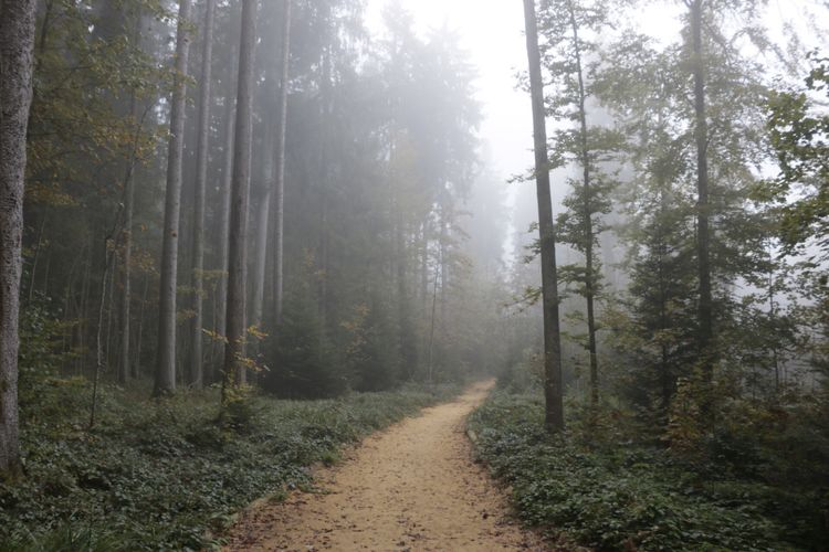 Empty pathway along trees in the forest