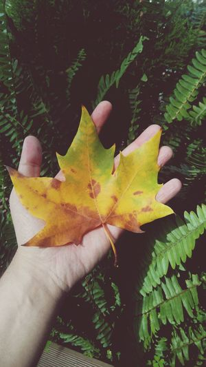 Human Hand Human Body Part One Person Leaf Personal Perspective Human Finger Outdoors Nature Palm Close-up People Leafporn Leafs Colors Leaf Turns Red And Yellow Autumn Collection Autumnbeauty Autumn Leafs Autumn Leaf In Hand