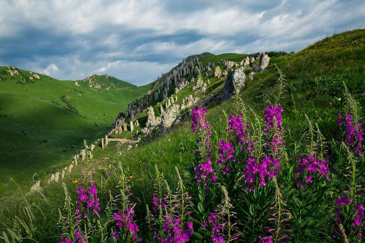 Purple flowering plants on land against sky