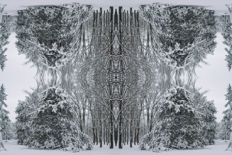 Digital composite of trees in snow