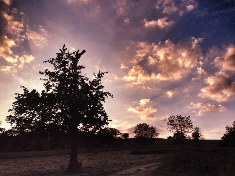 Sunset WeatherPro: Your Perfect Weather Shot