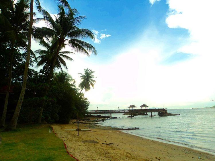 Pulau Ubin, Singapore Beach Cloud - Sky No People Outdoors Palm Tree Pulauubin Scenics Sea Sky Tree Water EyeEmNewHere EyeEmNewHere