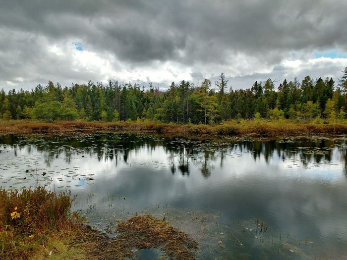 Sifton Bog in London, Ontario. Reflection Water Reflections Nature Nature Photography London Ontario Forest Trees Clouds Landscape Sifton Bog