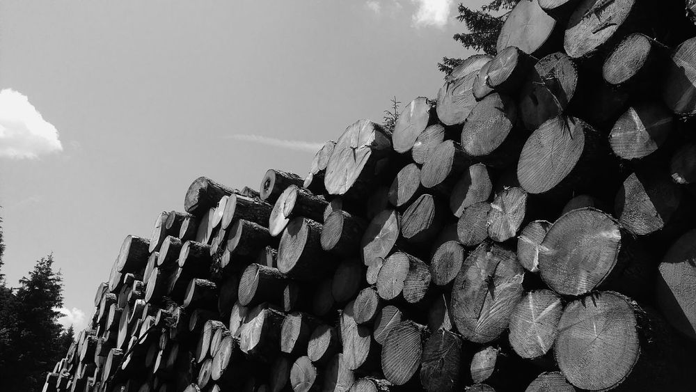 Abundance Architectural Feature Arrangement Cloud Day Development Environment Firewood Growth High Section In A Row Large Group Of Objects Low Angle View Modern No People Order Outdoors Repetition Sky Spiked Stack Treetop
