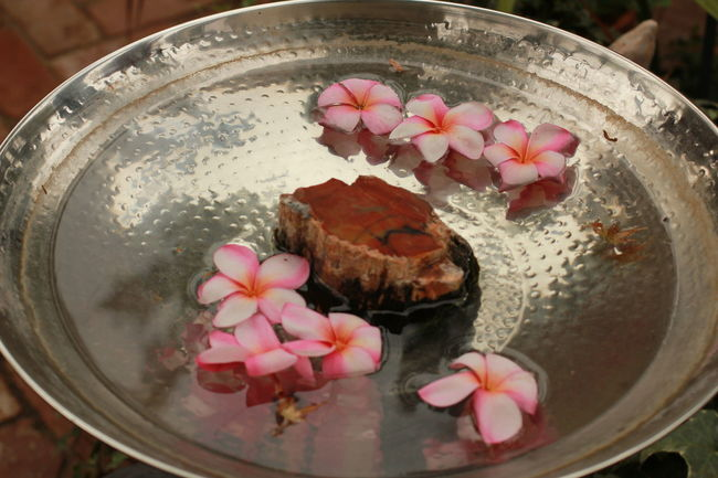 hawaiian flowers and petrified wood in a metal birdbath in the garden Birdbaths California Close-up Day Floating Floating On Water Flower Flower Head Freshness Garden Design Garden Photography Hawaii High Angle View Indoors  Metal No People Pacific Petrified Wood Ready-to-eat Rocks Souvenir Sweet Food Tropical Tropical Climate Water