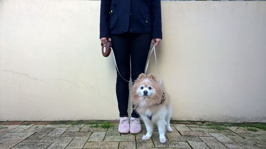 Low Section Of Woman With Dog Standing On Sidewalk Against Wall