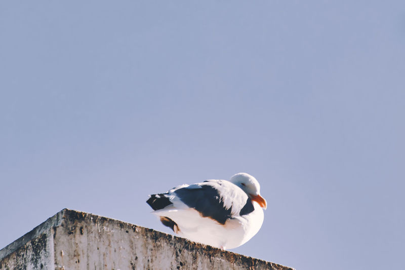 Low angle view of seagull on wall