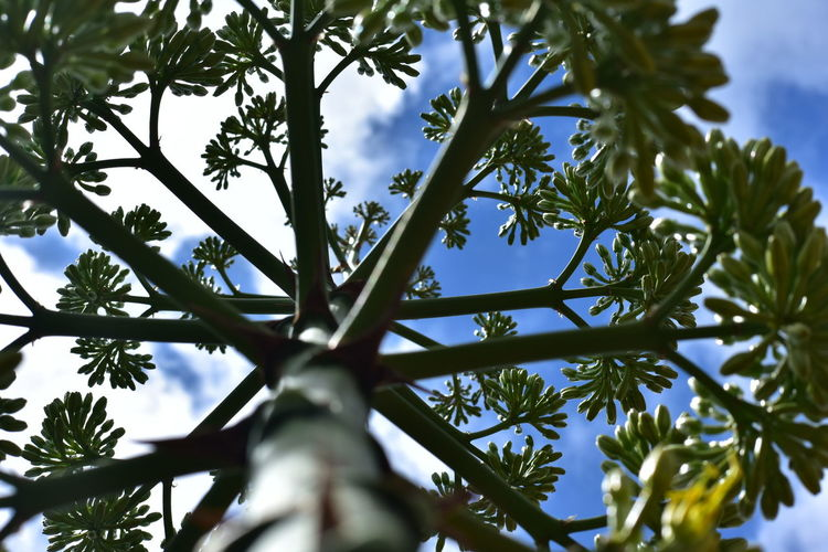 Tree Nature Leaf Low Angle View Growth Sky No People