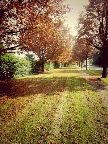 Autumn is here ... Scenery Trees