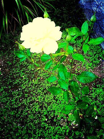 Flor hermosa