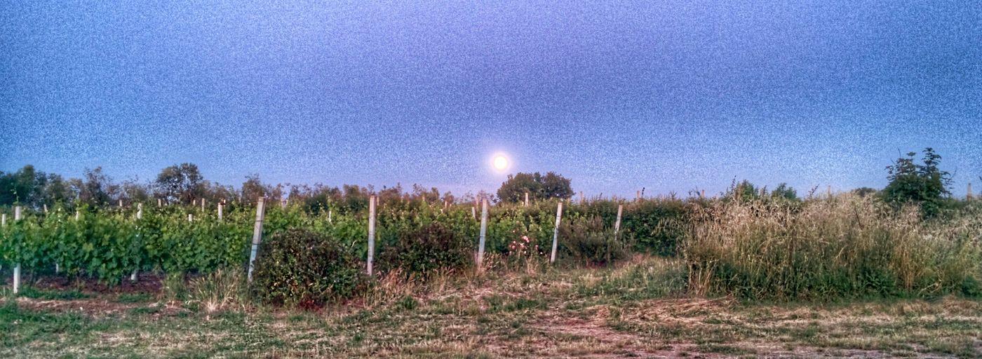 I colori di sera della campagna.