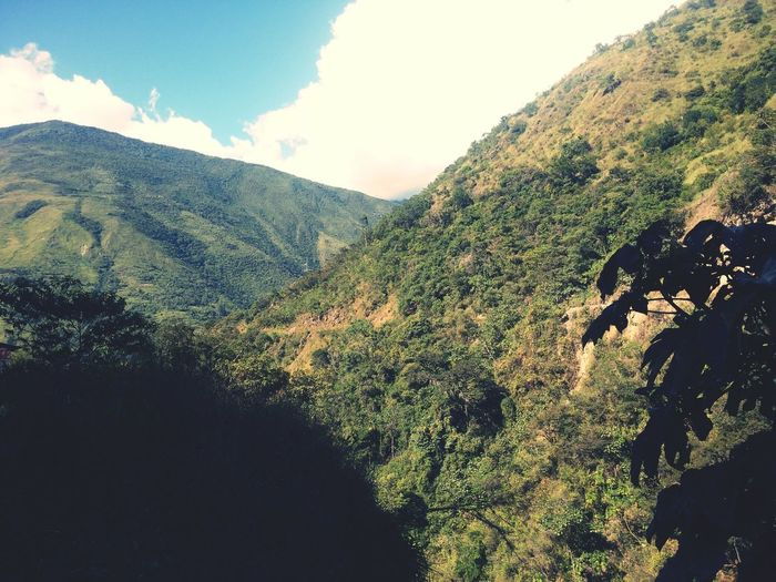 El bello paisaje la flora de santa terrsa First Eyeem Photo