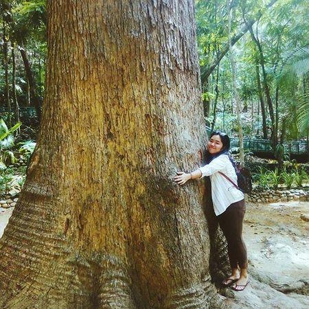 Hugging 200 years of life (Banulad tree) Treehugger Rizalshrine Dapitan Tree Century Old 100 Hug Hugging A Tree
