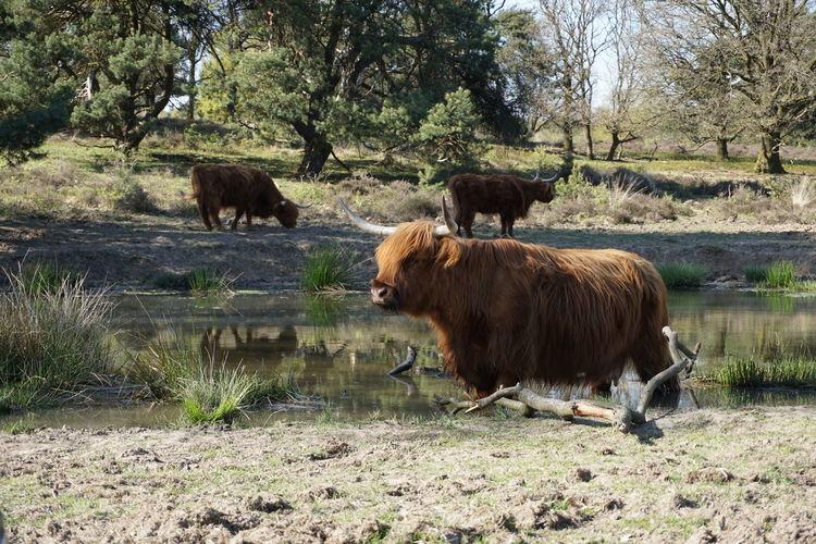 Nature National Park Netherlands Animals Veluwezoom EyeEmNewHere