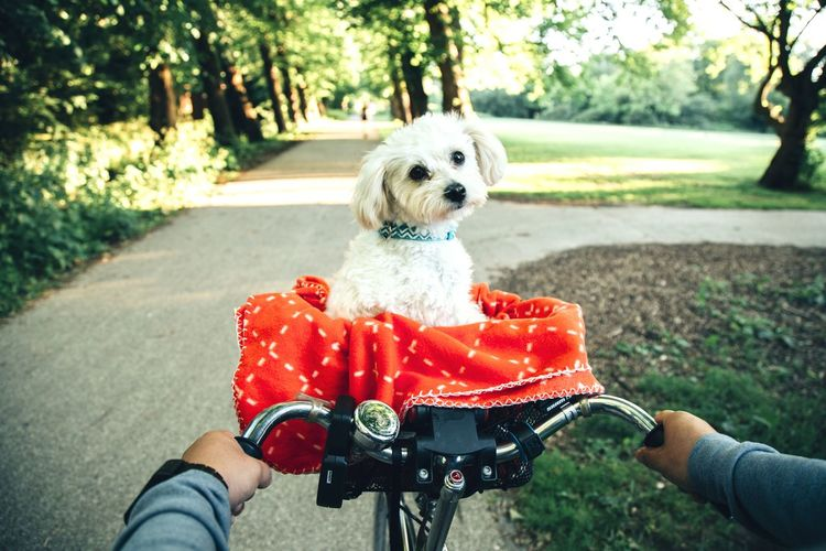 Bike ride in Amsterdam with dog in basket. Frankendael park Amsterdam. Human Hand First Person Perspective Amsterdam Amsterdamcity Bike Path Amsterdam Bikes Dogslife Dogs Of EyeEm Dogstagram Park Garden Netherlands Rescue Dog First Person View Amsterdam Oost Rescuedog Behind Bicycle People Riding Bike Friendship Pets Dog Puppy Tree Holding Cute Red Happiness Summer Exploratorium