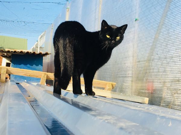 Black Cat Photography Black Cat Mammal Feline Pets Cat Domestic Domestic Animals Animal Themes